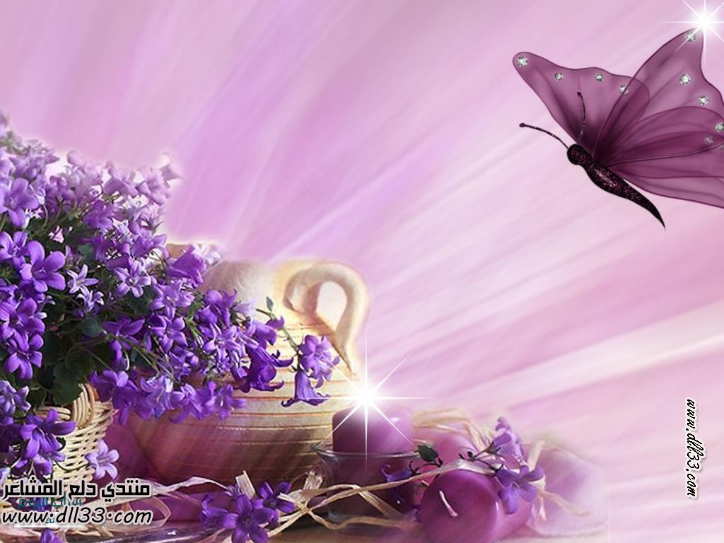 رد: حصري - صور خلفيات لسطح المكتب 2014 ... Animated Pink Butterflies