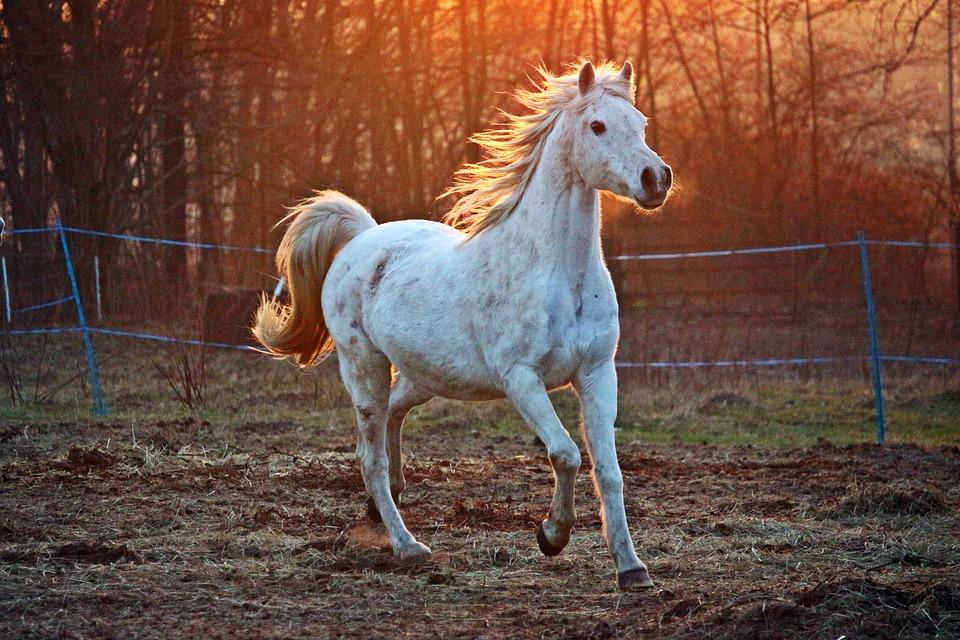 باقة مميزة من اجمل صور خيول 2018 1515764747965.jpg