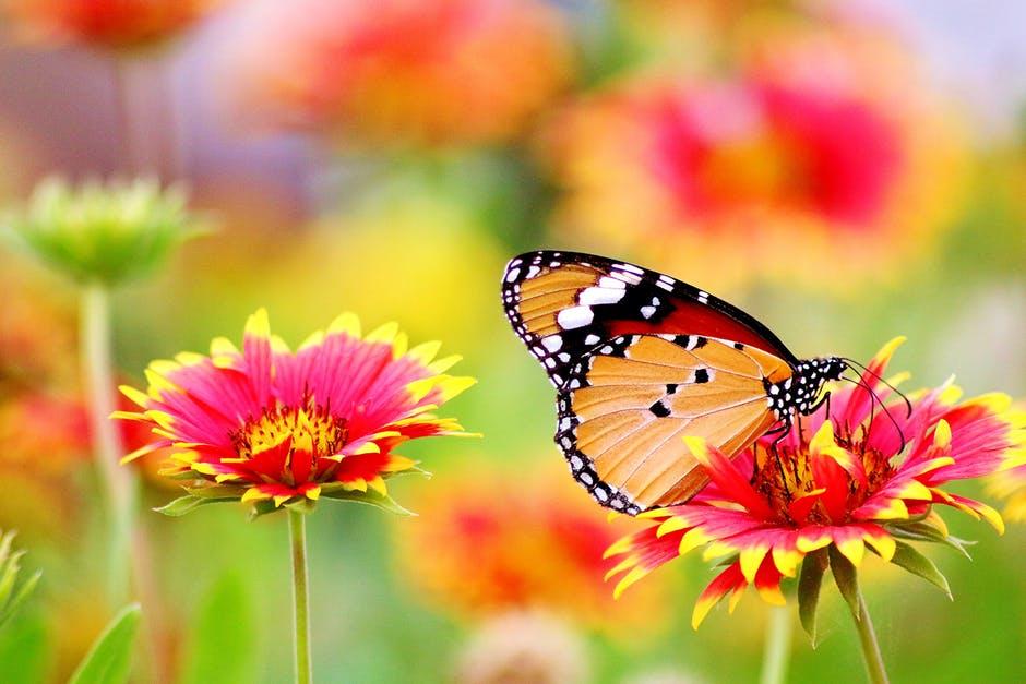 تشكيلة طبيعة غاية الروعة والجمال