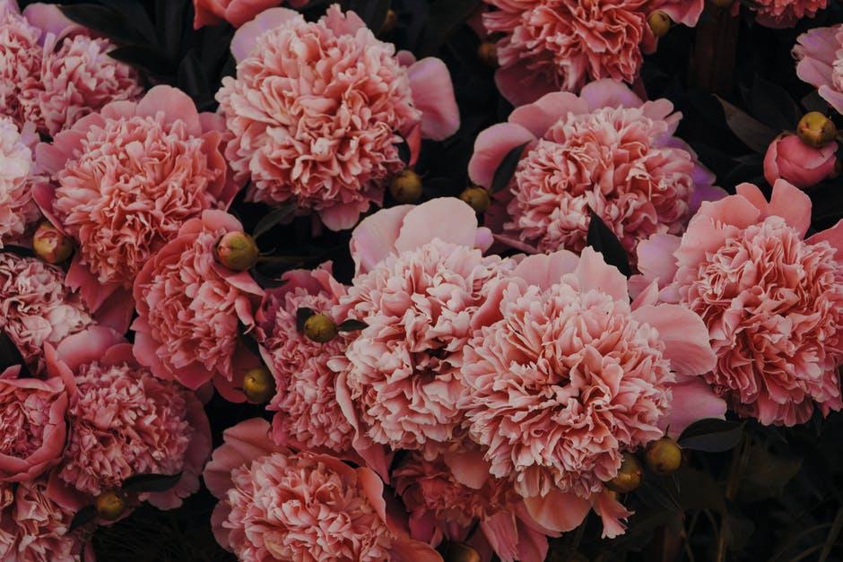 اجمل باللون الوردي 2019