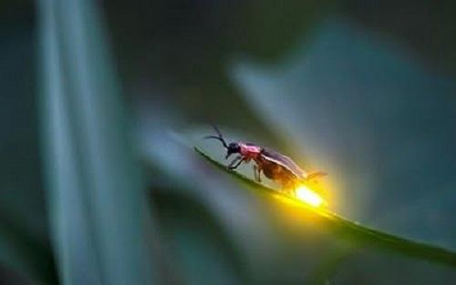الحشرات المضيئة 1552835464214.jpg